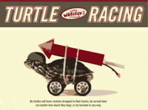 turtle racing in austin